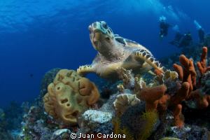 sea turtle &amp; divers by Juan Cardona 